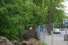 ogrod-w-maju-02
