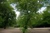 ogrod-w-maju-13