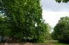 ogrod-w-maju-04