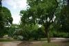 ogrod-w-maju-10