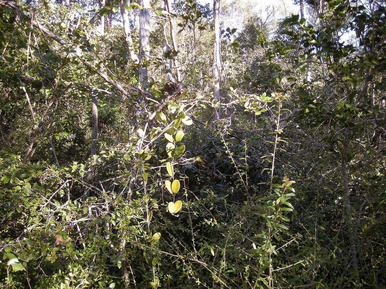 Chcemy dżunglę!!!111jede by Ethel Aadvark (wikipedia)