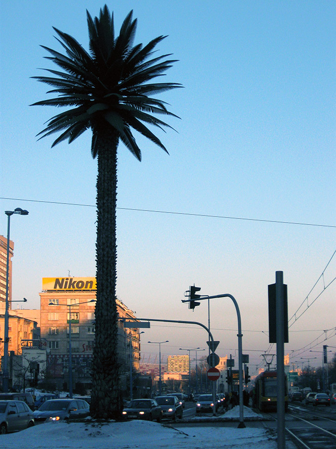 Palma na rondzie de Gaulla