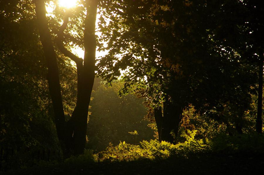 Remont zaszkodził przyrodzie w Ogrodzie Krasińskich? - fot. Witold Weszczak